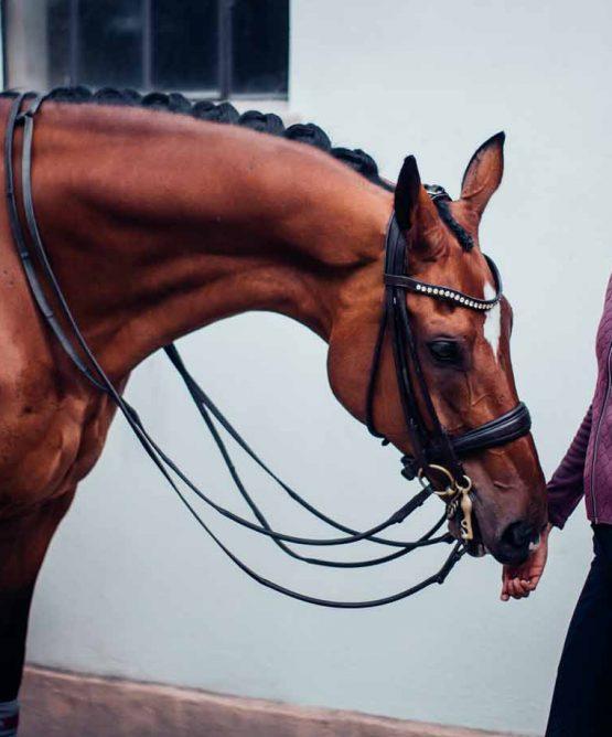 Equestrain Stockholm Sportsjacket Next Generation