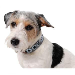 Hundhalsband Spooks | Grått