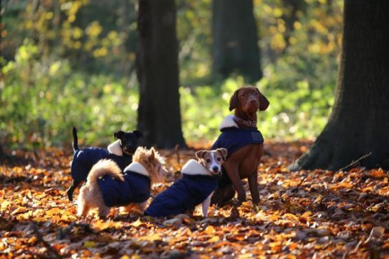 Hundtäcke från Kentucky Horsewear